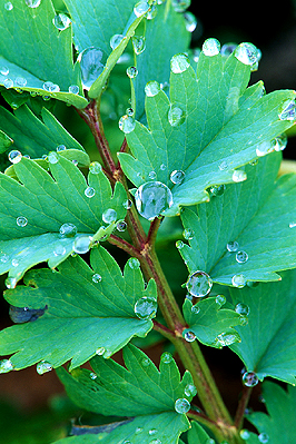 Water drops hitting a leaf
